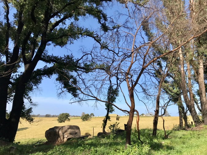 Regrowth After Bega Valley 2020 Bush Fires
