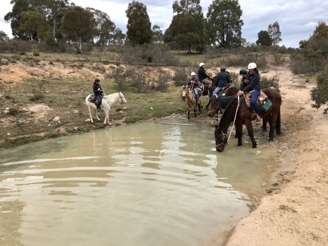 Horses drinking at a dam