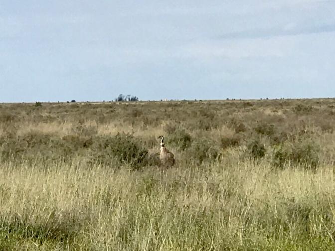 Spot the Emu