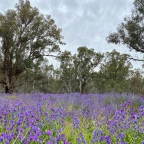 Narrandera to Hay; one long paddock