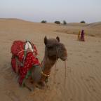 Thar Dessert; a mausoleum, a ghost town and a camel called Gerald